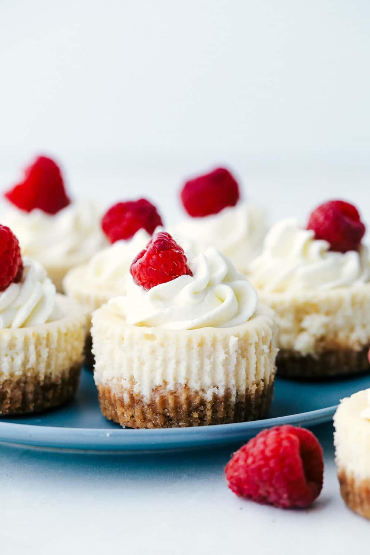 Mini cheese cakes on a plate with fresh raspberries.